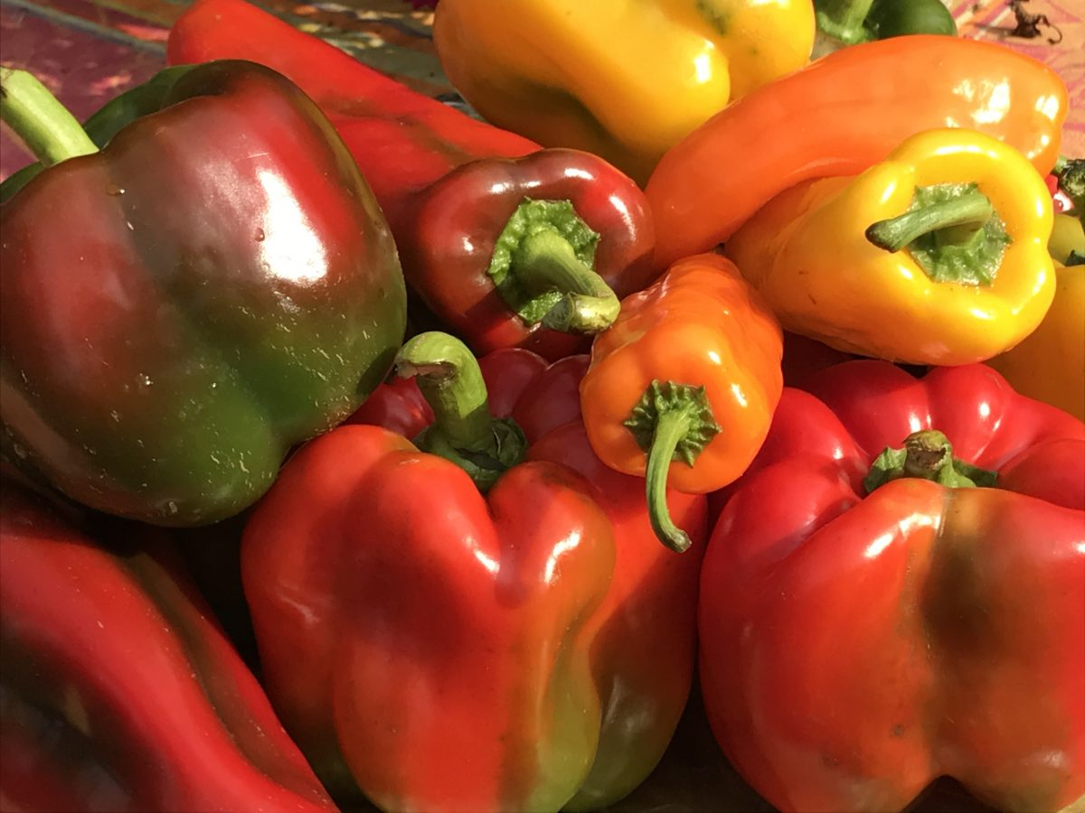 peppers in every color!